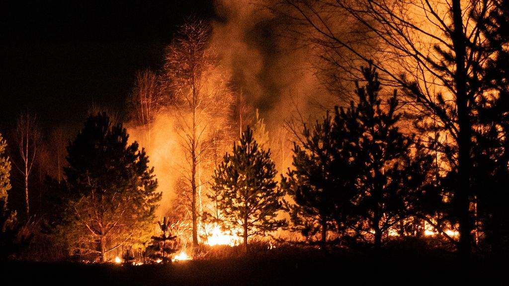 (Representative image) Wildfires erupted simultaneously on Monday overnight across 14 Algerian provinces, killing at least 40 and injuring dozens of others, the ministry said in a statement, which described the fires as caused by criminal act. (Egor Vikhrev/Unsplash)
