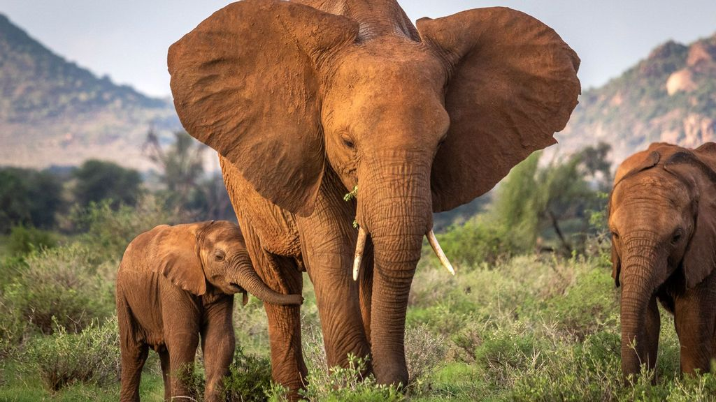 Mother elephant with her calf in the Samburu National Reserve, northern Kenya. (Robbie Labanowski, Save The Elephants/Zenger)